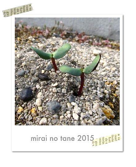 mirai_20150507.jpg